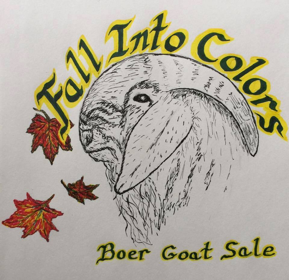 Fall Into Colors Boer Goat Sale