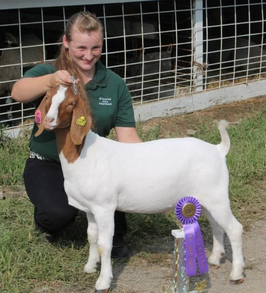 Becky Perhach's 2012 Light Weight Market Goat Champion @ Fayette County Fair